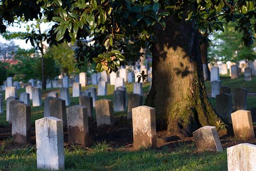 Confederate States of America「Graves under a magnolia tree in the Oakland Cemetery, Atlanta, Georgia」:スマホ壁紙(14)