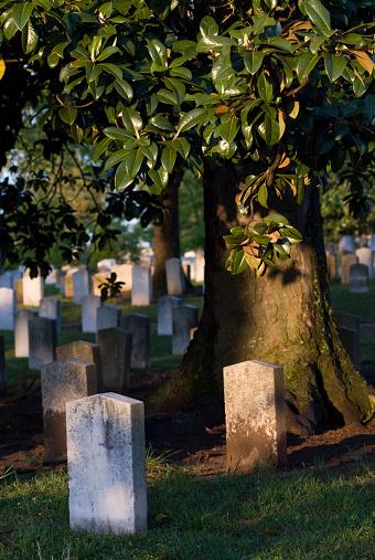 Confederate States of America「Graves under a magnolia tree at Oakland Cemetery in Atlanta, Georgia.」:スマホ壁紙(17)