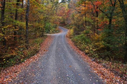 Arkansas「Unpaved road in rural Arkansas」:スマホ壁紙(5)