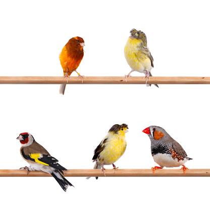 Canary「Colors Of Nature」:スマホ壁紙(6)