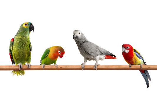 Parrot「Colors Of Nature」:スマホ壁紙(16)