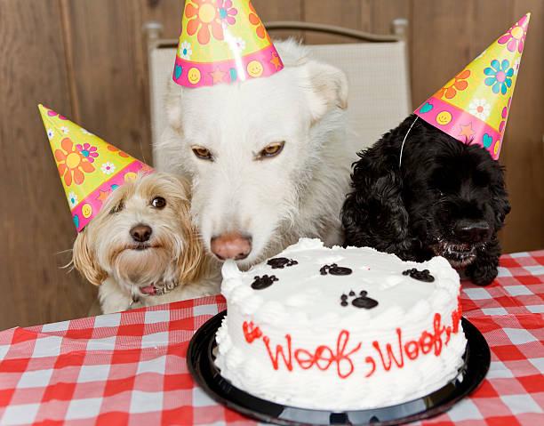 Dog Birthday Party Eating Cake:スマホ壁紙(壁紙.com)