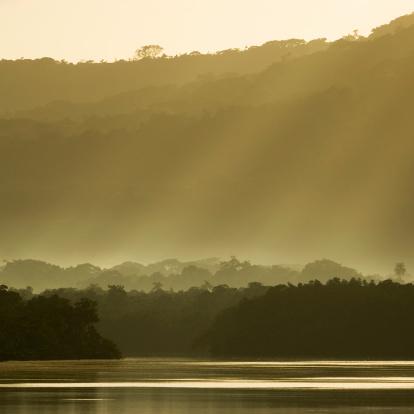 Amazon Rainforest「Brazilian Rainforest at Sunrise」:スマホ壁紙(1)