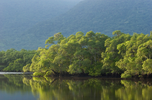 Amazon River「Brazilian Rainforest」:スマホ壁紙(16)