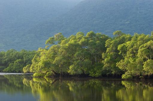 Amazon Rainforest「Brazilian Rainforest」:スマホ壁紙(19)