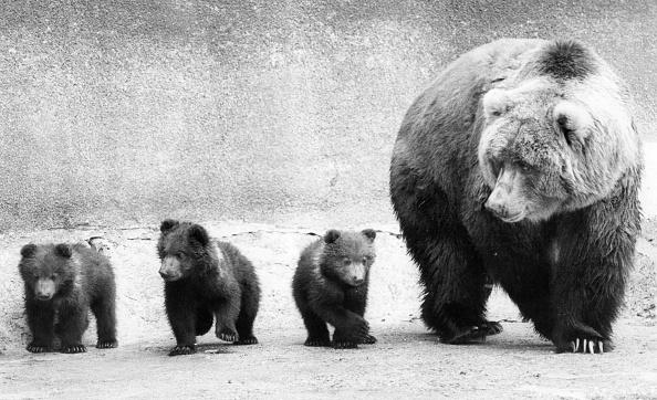 Bear Cub「Bear Family」:写真・画像(5)[壁紙.com]