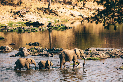 National Park「Wildlife elephants in Tanzania.」:スマホ壁紙(16)