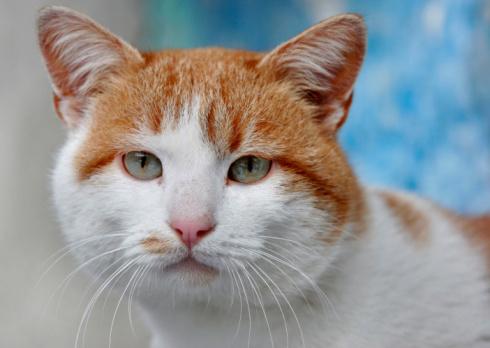 Mixed-Breed Cat「Mixed-breed cat」:スマホ壁紙(11)