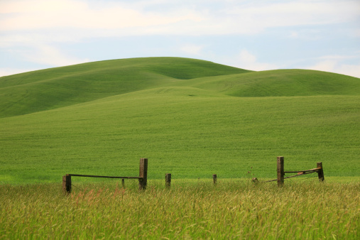 Rolling Landscape「Green Rolling Hills in Washington State」:スマホ壁紙(8)