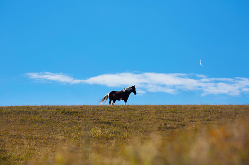 Focus On Background「Horse on hill top」:スマホ壁紙(15)