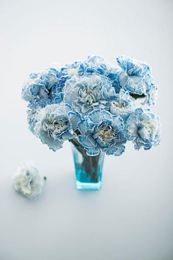 カーネーション「blue carnations」:スマホ壁紙(1)