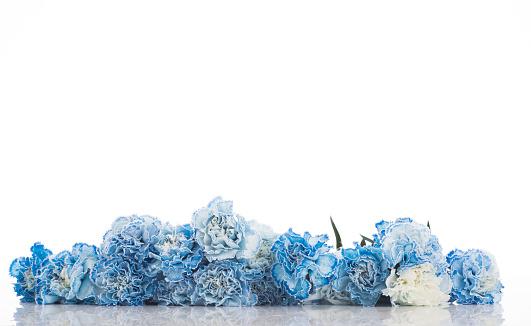 カーネーション「Blue carnations」:スマホ壁紙(18)