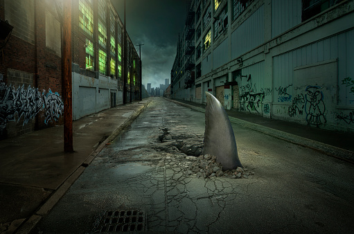 隠れる「Shark fin swimming in dilapidated city street」:スマホ壁紙(12)