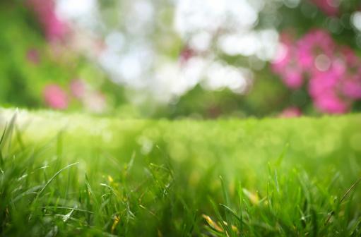 Beauty In Nature「freshness」:スマホ壁紙(19)