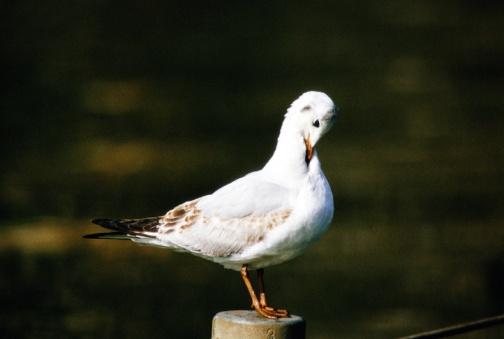 Grooming - Animal Behavior「Bird on post preening」:スマホ壁紙(12)