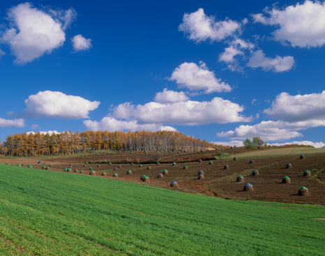 Kamikawa District - Ishikari「Field and Stack of Beans, Shinsei, Biei, Hokkaido, Japan」:スマホ壁紙(7)