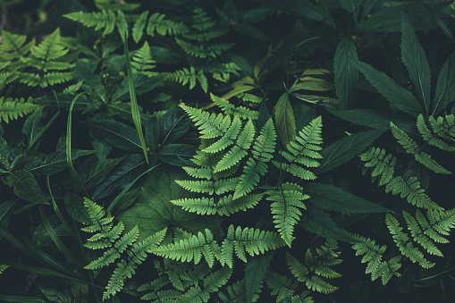 Tropical Rainforest「Jungle leaves background」:スマホ壁紙(4)