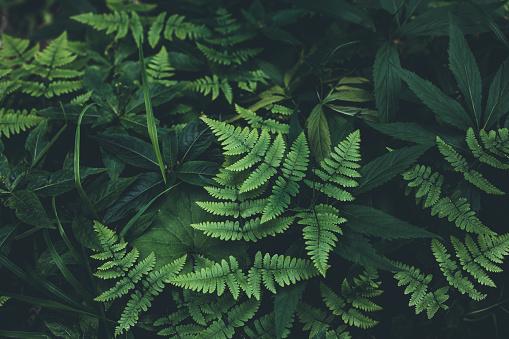 Wilderness Area「Jungle leaves background」:スマホ壁紙(9)