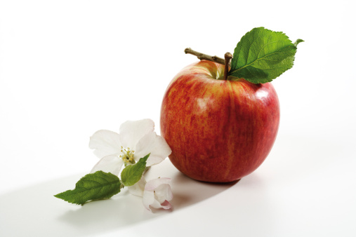 Apple Blossom「Red apple and flower, close-up」:スマホ壁紙(17)