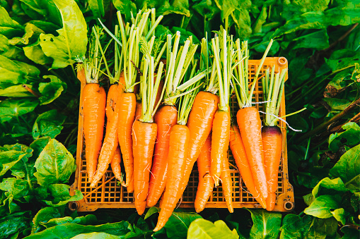 Carrot「Crate of carrots in garden」:スマホ壁紙(7)