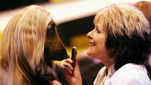 Owner「The 2005 Crufts Dog Show」:写真・画像(8)[壁紙.com]