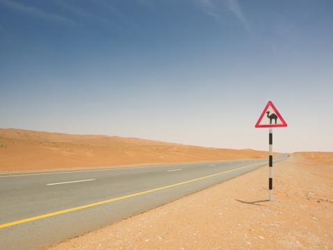 Oman「Camel Crossing Sign Empty Desert Highway」:スマホ壁紙(19)