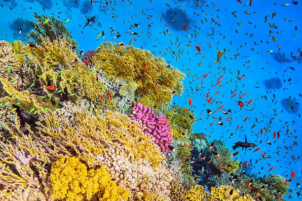 魚の学校でゴーラルガーデンに赤い海:スマホ壁紙(壁紙.com)