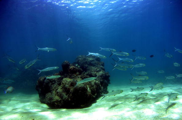 Maui「Coral Reefs In Danger」:写真・画像(11)[壁紙.com]