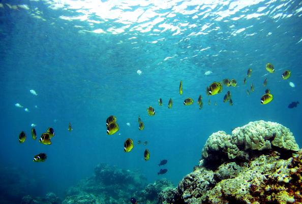 Hanauma Bay「Coral Reefs In Danger」:写真・画像(9)[壁紙.com]