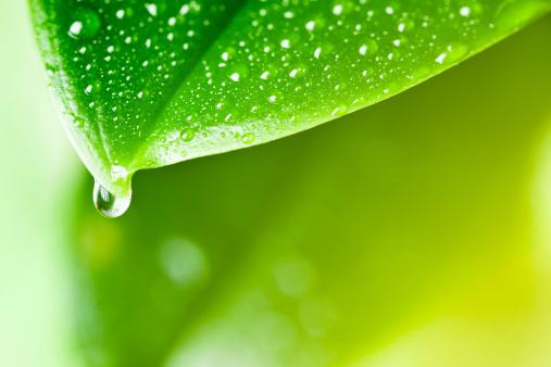 Droplet「リーフ、雨のドロップ」:スマホ壁紙(6)