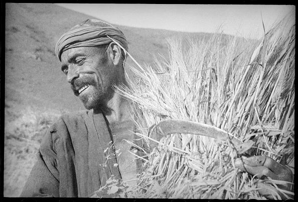 Tradition「Grain-Grower」:写真・画像(19)[壁紙.com]
