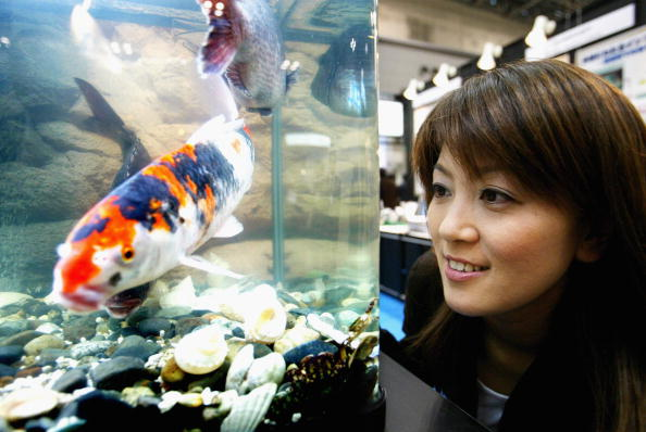 魚・熱帯魚「Scientists Develop 'Nano Bubble Water' In Japan」:写真・画像(4)[壁紙.com]