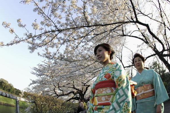 Petal「Cherry Blossoms Bloom In Japan」:写真・画像(15)[壁紙.com]