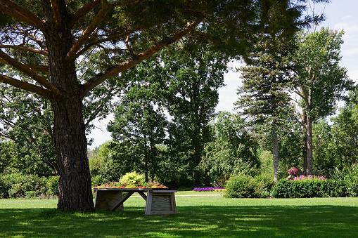 造園「ベンチの色合いの木の庭園」:スマホ壁紙(14)