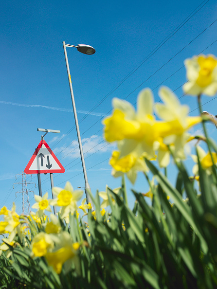 Surface Level「Daffodils, road sign and streetlight, low angle」:写真・画像(3)[壁紙.com]