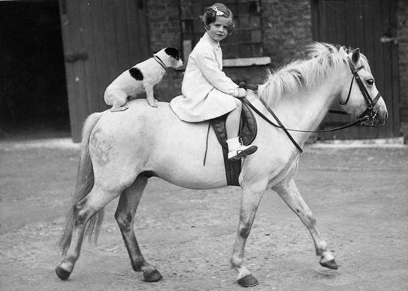Horse「Hitching A Lift」:写真・画像(6)[壁紙.com]