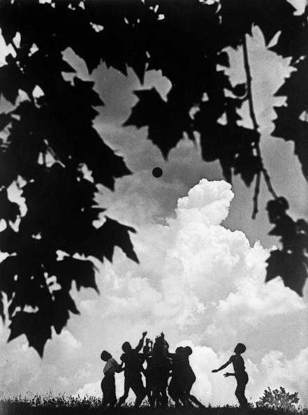 セイヨウカジカエデ「Storm Clouds」:写真・画像(19)[壁紙.com]