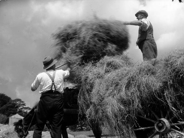 Chaloner Woods「Haymaking」:写真・画像(14)[壁紙.com]