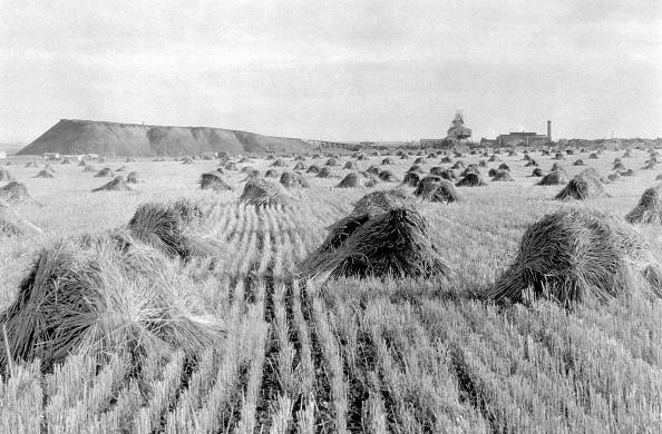 Grass Family「Wheat Field」:写真・画像(7)[壁紙.com]
