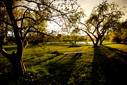 Back Lit「Germany, Schleswig Holstein, View of garden at sunset」:スマホ壁紙(4)