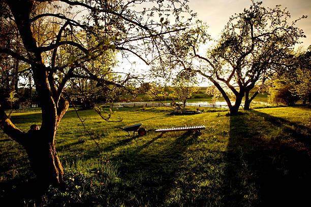 Germany, Schleswig Holstein, View of garden at sunset:スマホ壁紙(壁紙.com)