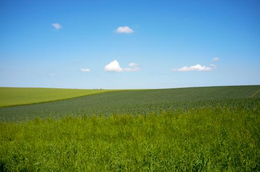 草地「Germany, Schleswig Holstein, View of grassland」:スマホ壁紙(4)
