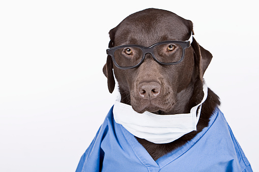 Medical Scrubs「Chocolate Labrador Surgeon」:スマホ壁紙(8)