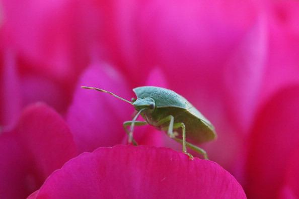 虫・昆虫「Insect Numbers In Decline After Wet Summer」:写真・画像(18)[壁紙.com]