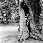 シャーウッドの森壁紙の画像(壁紙.com)