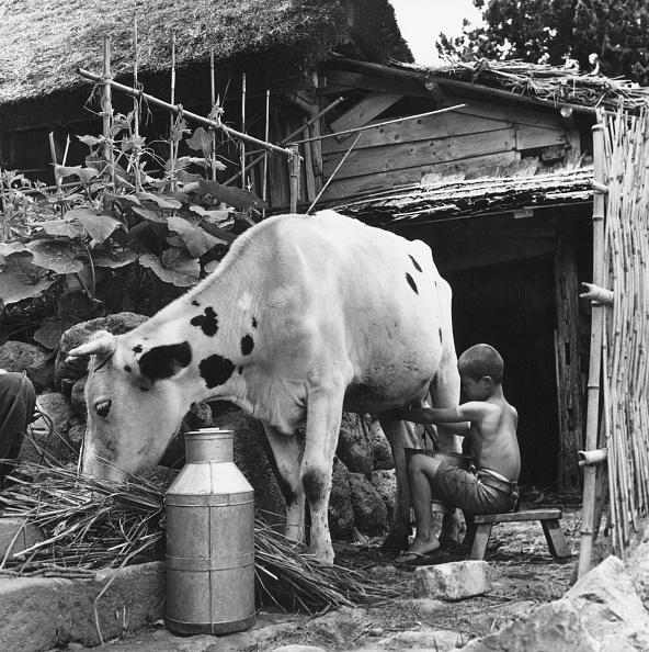 Responsibility「Milking The Cow」:写真・画像(2)[壁紙.com]