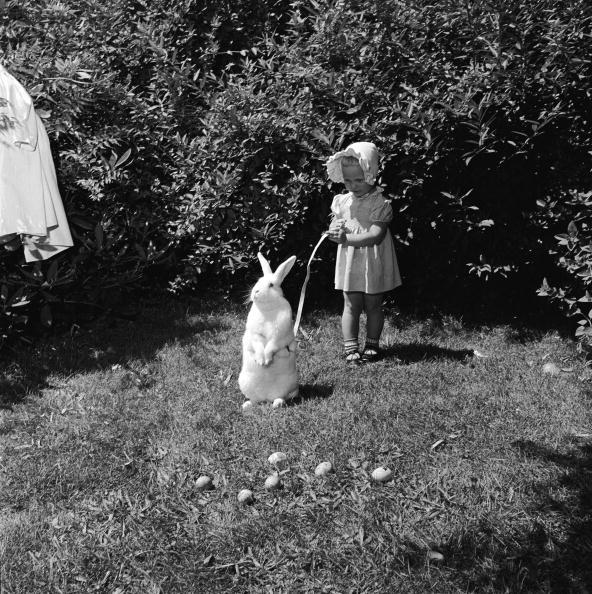 イースター「Easter Egg Hunt」:写真・画像(3)[壁紙.com]
