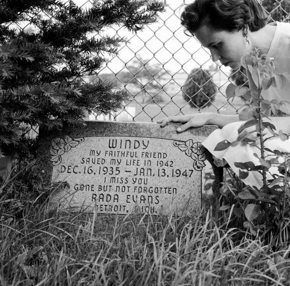 The Knife「Pet's Grave」:写真・画像(15)[壁紙.com]