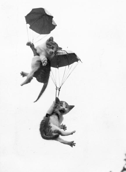 動物「Adventurous Cats」:写真・画像(11)[壁紙.com]