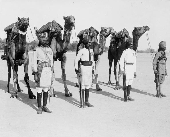 animal「Camel Corps」:写真・画像(6)[壁紙.com]